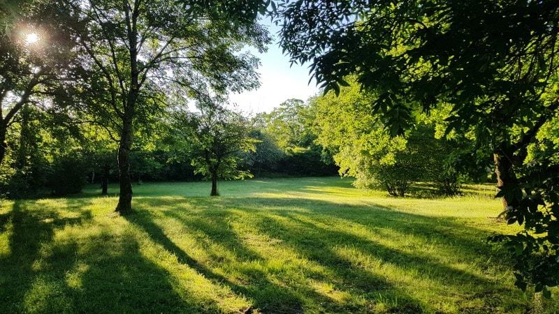 Jardins de bon matin